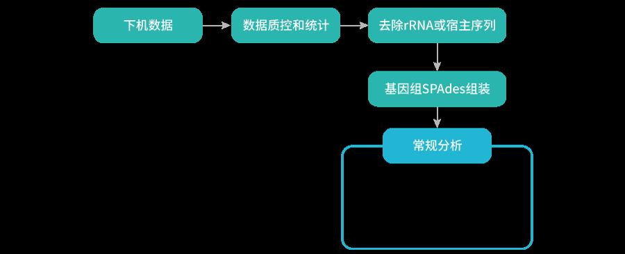病毒基因组测序-分析流程